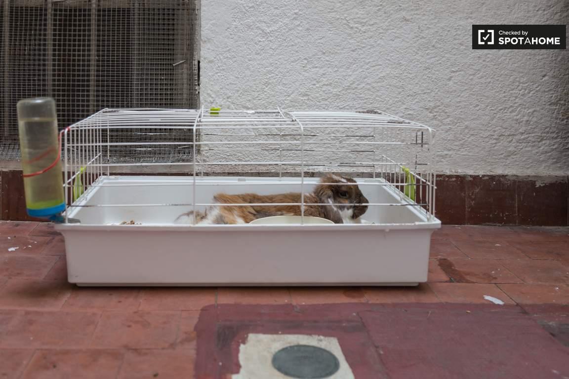 Landlord's pet rabbit