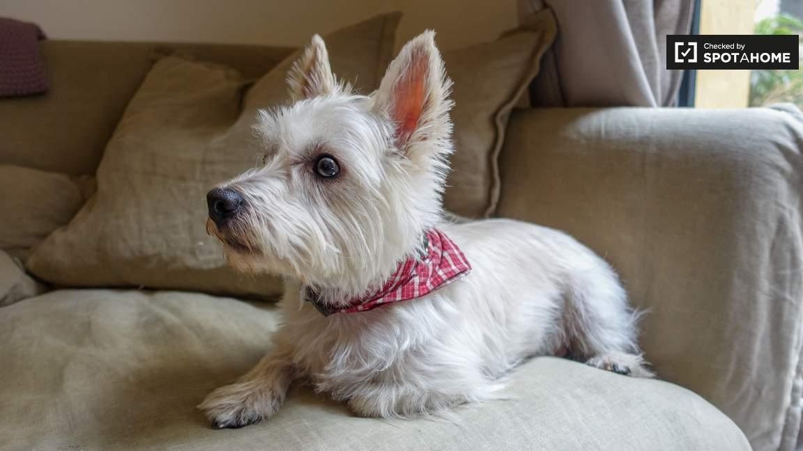 Landlord's dog
